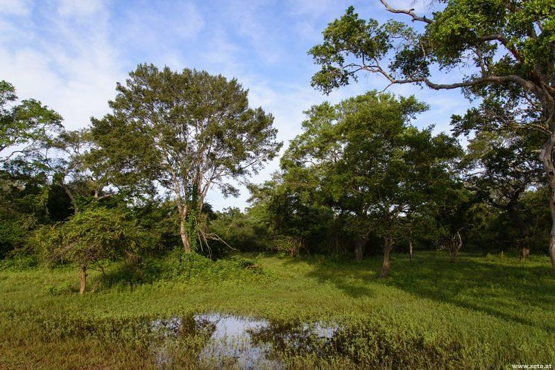 DSM 1576 Ceylon Sri Lanka Yala Yala National Park Yala Nationalpark